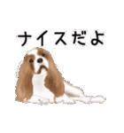動く!キャバリア(個別スタンプ:20)