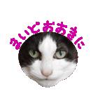 ωマニア用!猫による顔文字スタンプ(個別スタンプ:01)