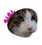 ωマニア用!猫による顔文字スタンプ(個別スタンプ:02)