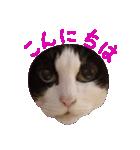ωマニア用!猫による顔文字スタンプ(個別スタンプ:05)