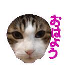 ωマニア用!猫による顔文字スタンプ(個別スタンプ:07)