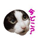 ωマニア用!猫による顔文字スタンプ(個別スタンプ:10)