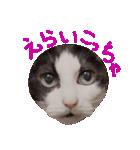 ωマニア用!猫による顔文字スタンプ(個別スタンプ:15)