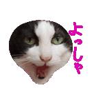 ωマニア用!猫による顔文字スタンプ(個別スタンプ:19)