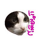 ωマニア用!猫による顔文字スタンプ(個別スタンプ:21)