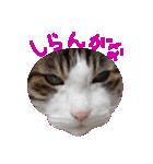 ωマニア用!猫による顔文字スタンプ(個別スタンプ:22)