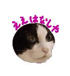 ωマニア用!猫による顔文字スタンプ(個別スタンプ:26)