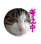 ωマニア用!猫による顔文字スタンプ(個別スタンプ:27)