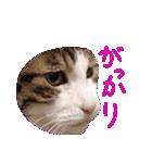 ωマニア用!猫による顔文字スタンプ(個別スタンプ:29)