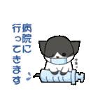 【日常用】行動猫スタンプ(個別スタンプ:16)