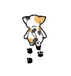 【日常用】行動猫スタンプ(個別スタンプ:40)