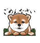 大人春柴っち(敬語編)(個別スタンプ:20)