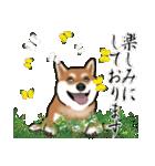 大人春柴っち(敬語編)(個別スタンプ:22)