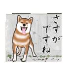 大人春柴っち(敬語編)(個別スタンプ:23)