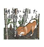 大人春柴っち(敬語編)(個別スタンプ:33)