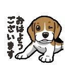 わんこ日和 ビーグル こいぬ vol.4 敬語(個別スタンプ:01)