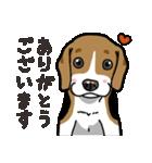 わんこ日和 ビーグル こいぬ vol.4 敬語(個別スタンプ:03)