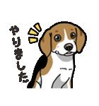 わんこ日和 ビーグル こいぬ vol.4 敬語(個別スタンプ:05)