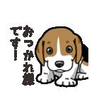 わんこ日和 ビーグル こいぬ vol.4 敬語(個別スタンプ:06)