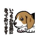 わんこ日和 ビーグル こいぬ vol.4 敬語(個別スタンプ:07)
