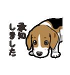 わんこ日和 ビーグル こいぬ vol.4 敬語(個別スタンプ:09)