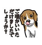わんこ日和 ビーグル こいぬ vol.4 敬語(個別スタンプ:11)