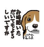 わんこ日和 ビーグル こいぬ vol.4 敬語(個別スタンプ:19)