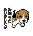 わんこ日和 ビーグル こいぬ vol.4 敬語(個別スタンプ:25)