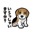 わんこ日和 ビーグル こいぬ vol.4 敬語(個別スタンプ:28)