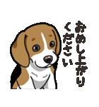 わんこ日和 ビーグル こいぬ vol.4 敬語(個別スタンプ:30)
