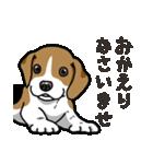 わんこ日和 ビーグル こいぬ vol.4 敬語(個別スタンプ:36)