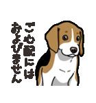 わんこ日和 ビーグル こいぬ vol.4 敬語(個別スタンプ:38)
