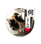 気まま猫舎(個別スタンプ:01)