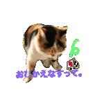 気まま猫舎(個別スタンプ:02)