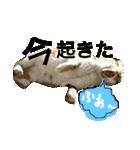 気まま猫舎(個別スタンプ:03)