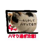 気まま猫舎(個別スタンプ:04)