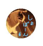 気まま猫舎(個別スタンプ:05)