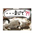 気まま猫舎(個別スタンプ:06)