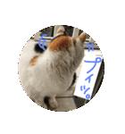 気まま猫舎(個別スタンプ:07)