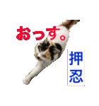 気まま猫舎(個別スタンプ:09)