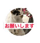気まま猫舎(個別スタンプ:10)