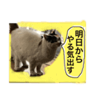 気まま猫舎(個別スタンプ:11)
