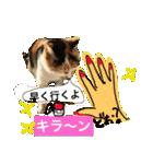 気まま猫舎(個別スタンプ:12)