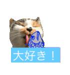 気まま猫舎(個別スタンプ:13)