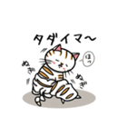 ちゃしろぶさへたねこ茶輔(さすけ)(個別スタンプ:07)