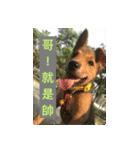 I am funny dog(個別スタンプ:01)