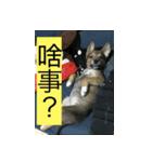 I am funny dog(個別スタンプ:02)