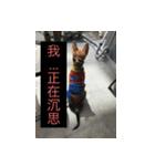 I am funny dog(個別スタンプ:04)