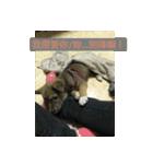 I am funny dog(個別スタンプ:05)