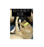 I am funny dog(個別スタンプ:08)